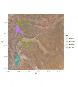 Movements of four collared females in and around Kuruman River Reserve, home to the Kalahari Meerkat Project